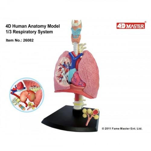 4D Master Solunum Sistemi Maketi